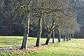 Poertschach Brockweg Obstbaumallee 29122012 211.jpg