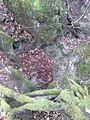 Poklop, 10m od vchodu do jaskyne Velke Prepadle - panoramio.jpg
