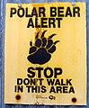 Polar bear alert (6374859923).jpg
