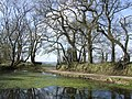 Pond and oaks at Godworthy Farm - geograph.org.uk - 427295.jpg