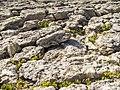 Ponta do Sal, rochas e flora.jpg