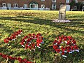 Poppies on the Forty (geograph 5972172).jpg