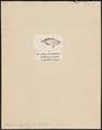 Porthmeus argenteus - 1700-1880 - Print - Iconographia Zoologica - Special Collections University of Amsterdam - UBA01 IZ13500443.tif