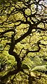 Portland Japanese Garden (2013-09-10 14.27.04 by Jon Roberts).jpg