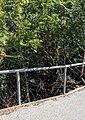 Purisima Creek entering Los Altos.jpg