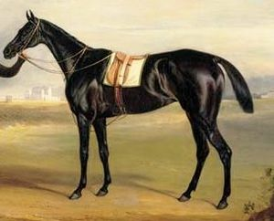 Pussy (horse) - Pussy in an 1834 painting by John E. Ferneley