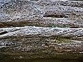 Quartzose sandstone (Black Hand Sandstone, Lower Mississippian; Black Hand Gorge, Ohio, USA) 4 (30298008754).jpg