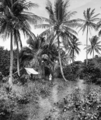 Queensland State Archives 1257 Coconut Palm Avenue Green Island c 1935.png