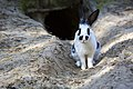 Rabbit in the forestry zoo.jpg