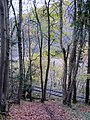 Rails through the woods by the river - Nov 2013 - panoramio.jpg