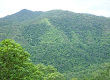 rainforest characteristics