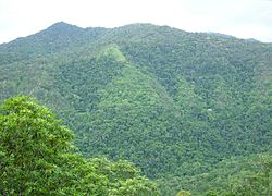 The Daintree Rainforest near Cairns, in Queensland, Australia