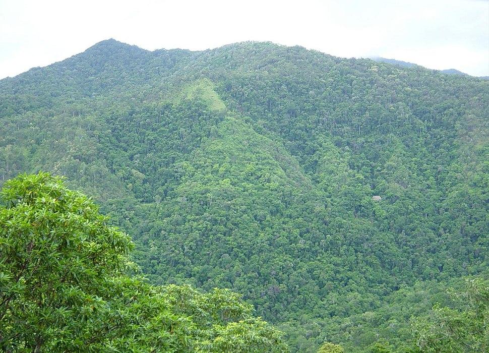 Rainforrest between Kuranda and Cairns, North East Queensland