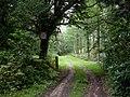 Redlynch, woodland track (geograph 2081456).jpg