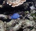 Reef 8 (4385932096).jpg