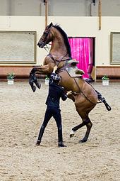 2 stallions for a hot euro slut - 3 8