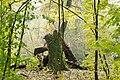 Rezerwat przyrody Morysin, park 6.jpg