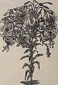 Rhododendrons, boxwood, azaleas, clematis, novelties, bay trees, hardy plants, evergreens - novelties bulbs, cannas novelties, palms, araucarias, ferns, vines, orchids, flowering shrubs, ornamental (20536373486).jpg