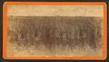 Rice field, Savannah, Ga, by Havens, O. Pierre, 1838-1912.png