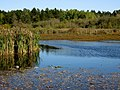 Rithet's Bog pond. READ MORE IN PANORAMIO-COMMENT - panoramio.jpg