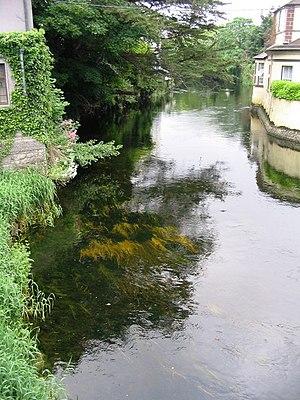 Shannon River Basin - River Fergus, Ennis