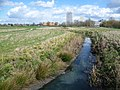 River Moselle and Broadwater Farm Estate, London (1).jpg