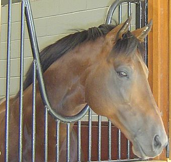 Brown horse looking out over a railing. The head is sideways to the camera and the horse is looking into the distance.
