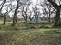 Romano-British farmstead in Riding Wood - geograph.org.uk - 712814.jpg