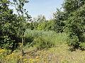 Roost-Warendin - Terril n° 136, Roost Lains Ouest (04).JPG