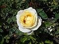 Rosa Chopin 2018-07-16 6264.jpg