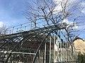 Roseraie du parc du château d'Eloyes (1).jpg