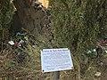 Ruïnes de l'ermita de Sant Pere Màrtir.jpg
