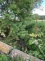Ru du gué, affluent de la Beuvronne à Messy (1).jpg