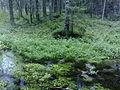 Ryövärinpolun luonnonsuojelualue.jpg