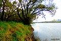 Rzeka Wisła widok z prawego brzegu rzeki w kierunku Fordonu. Brak przejścia i trzeba wejść w krzaki .Widok - Zakłady Zbożowe Fordon - panoramio.jpg