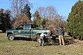 SB VSCC boxwood restoration at Mulberry Hill (15530977043).jpg