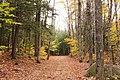 Sabbaday Falls Trail, Kancamagus Hwy, Waterville Valley (494201) (11924922296).jpg
