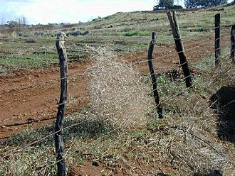 Barbed wire - A rangeland fence
