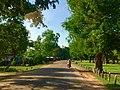 Sangkat Kouk Chak, Krong Siem Reap, Cambodia - panoramio (13).jpg