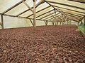 Sao Tome Monteforte Cocoa Beans 1 (16247149711).jpg