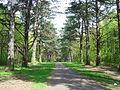 Scenic drive at Sandringham - geograph.org.uk - 11799.jpg