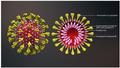 Schema unui coronavirus.png