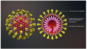 Schema of coronavirus