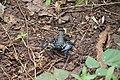 Scorpion from PArambikulam (1).jpg