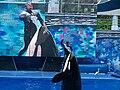 SeaWorld Orlando067.jpg