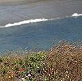 Sea Weeds (230845583).jpg