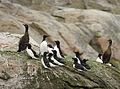Seabirds LC0141.jpg