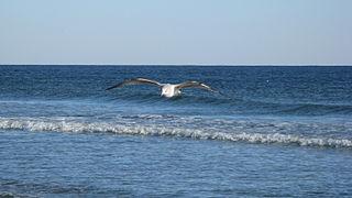 Sunset Beach, North Carolina Seaside town in North Carolina, United States