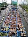 Seed pots (15963516779).jpg