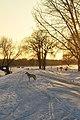 Selkirk Park, Selkirk (484594) (23881200804).jpg